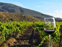Tours in the Baja wine country