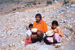 Tarahumara devastated corn field