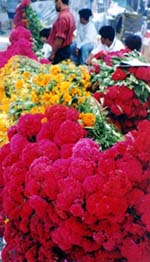 Colorful flowers in the marketplace.