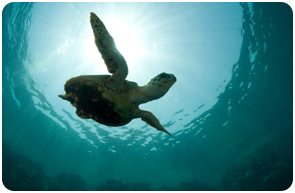 ASUPMATOMA - The Association for the Protection of the Environment and the Marine Turtle in Southern Baja