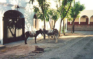 Miner's donkeys on a side street